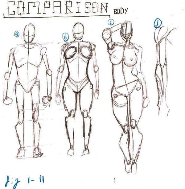 My FYP Project: Research - David Finch Dynamic Figure Drawing Body ...