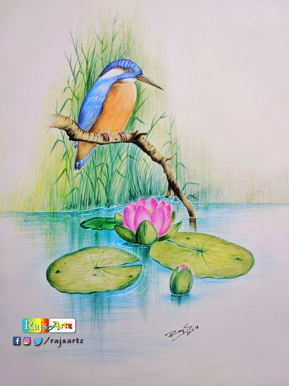 Quiet Nature Color Pencil Art Color Pencil Art Bird Watercolor Paintings Oil Pastel Drawings