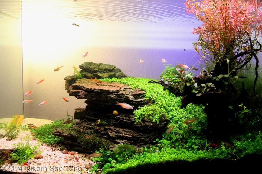 2014 aga aquascaping contest entry 236 aquarium pinterest aquarium schlafzimmer und. Black Bedroom Furniture Sets. Home Design Ideas