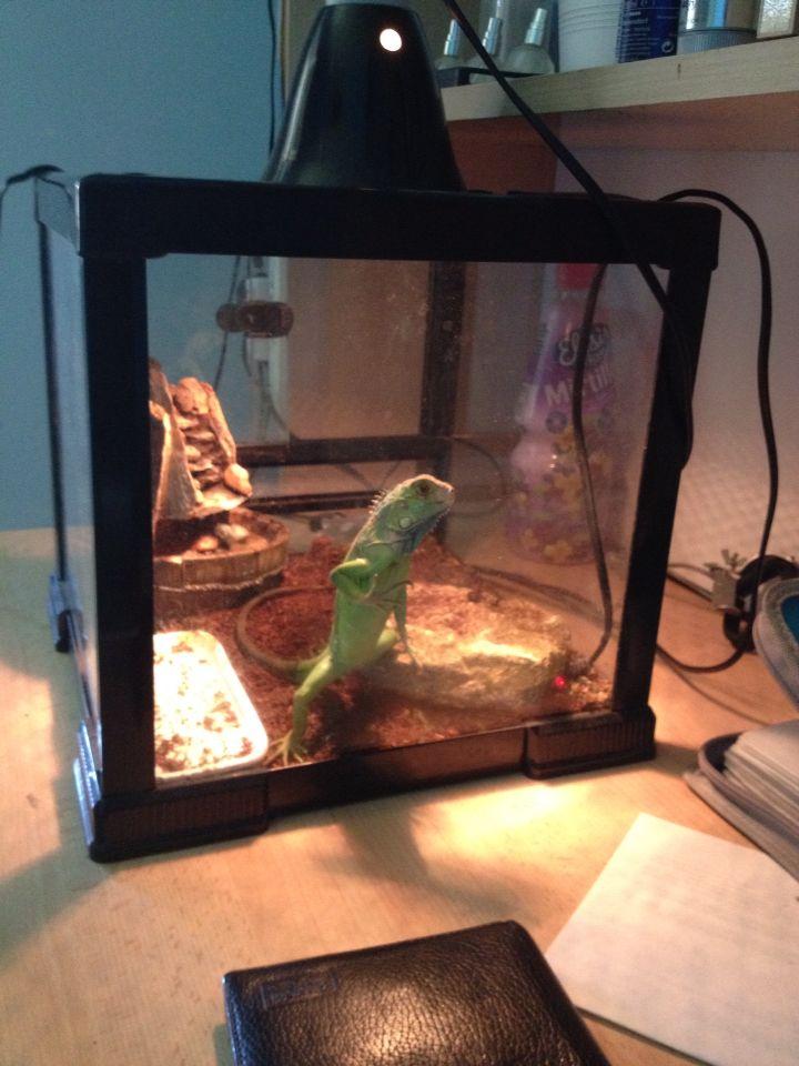 Dino cerca di attirare l'attenzione... Questo dopo che finisce il mangiare