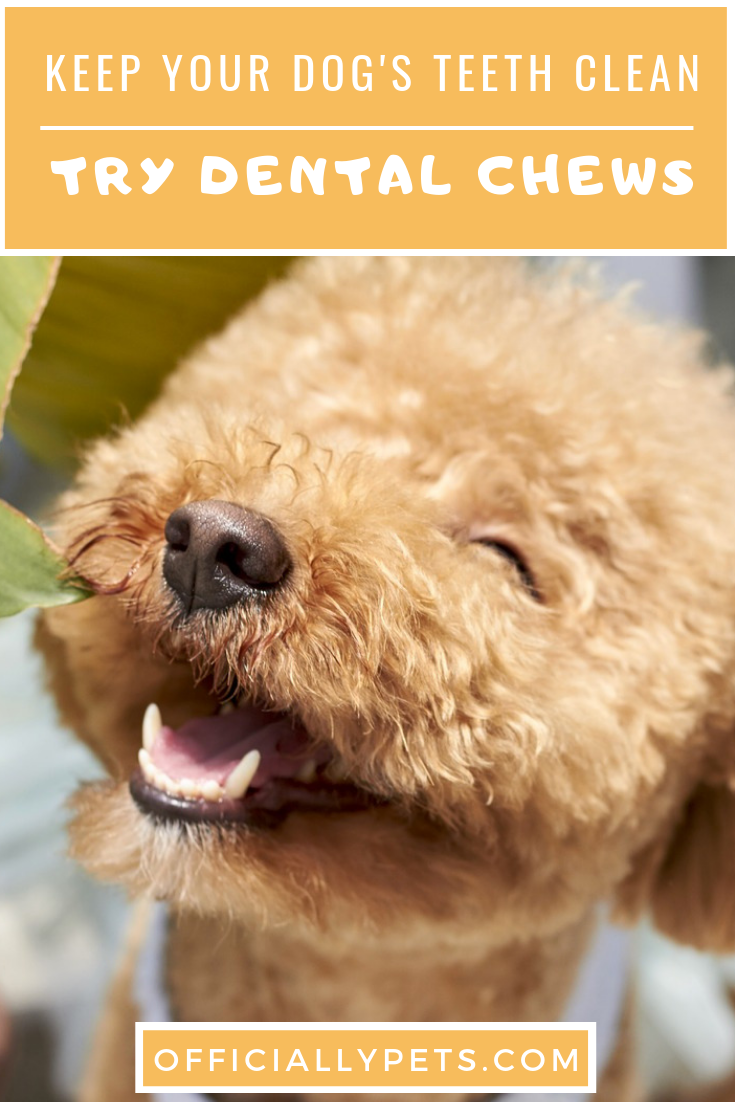 Best Dog Teeth Cleaning Treats The Top 10 Dog Dental