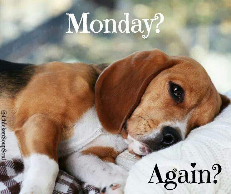 This Was Me This Morning Beagle Buddies Beagle Dog