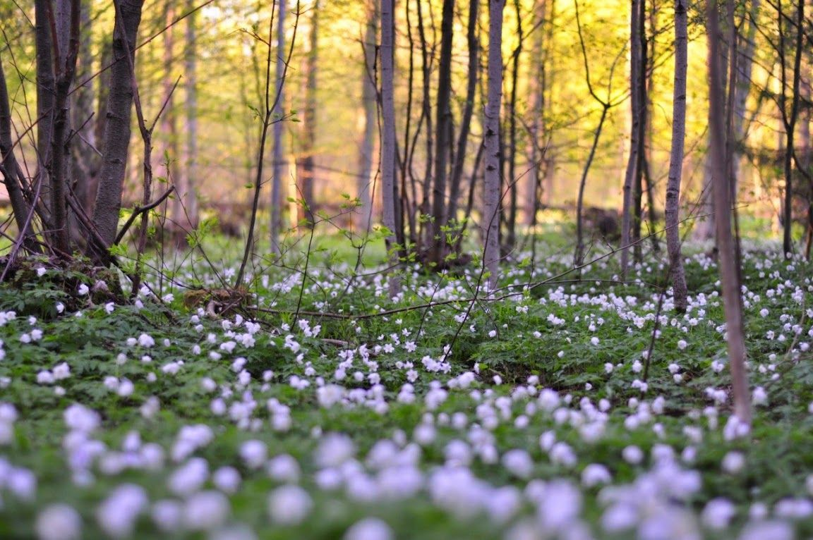 Forest In Belarus Nature National Geographic Environment