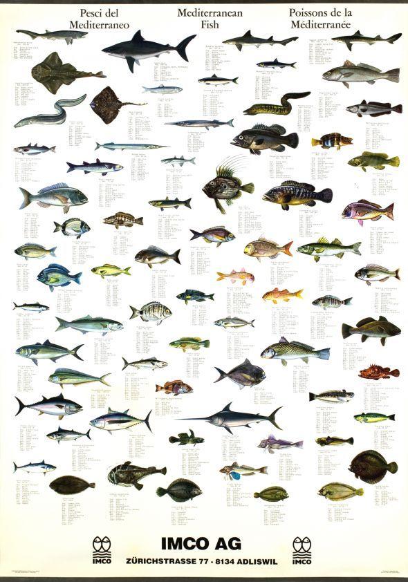 Mediterranean Fish | x | Pinterest