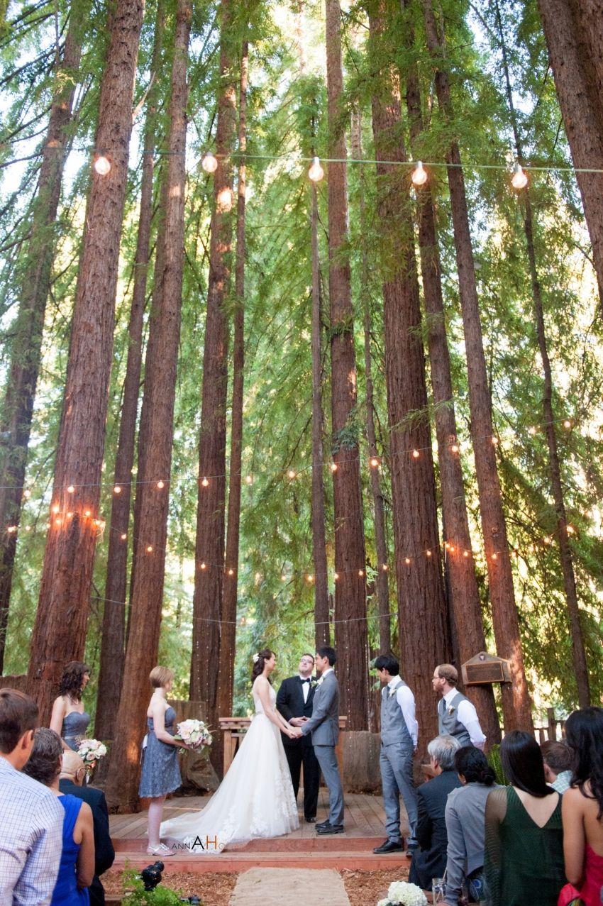 Photo of J'adore la façon dont notre photographe, Anna Hogan, a capturé les séquoias en plein essor au YMCA C …