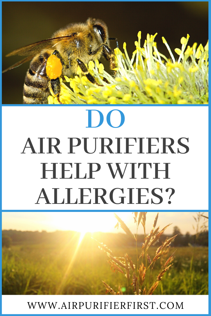 Do Air Purifiers Help With Allergies? in 2020 Air