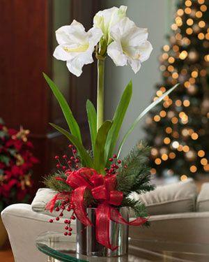 Amaryllis silk flower arrangement holiday ideas pinterest silk white amaryllis silk flower arrangement for christmas holiday decorating mightylinksfo