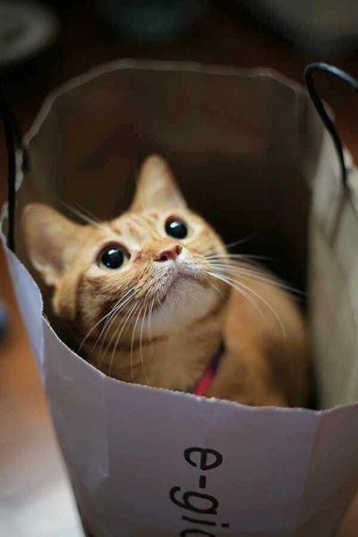 Niedliches Katzenspielzeug | Katzen spielzeug