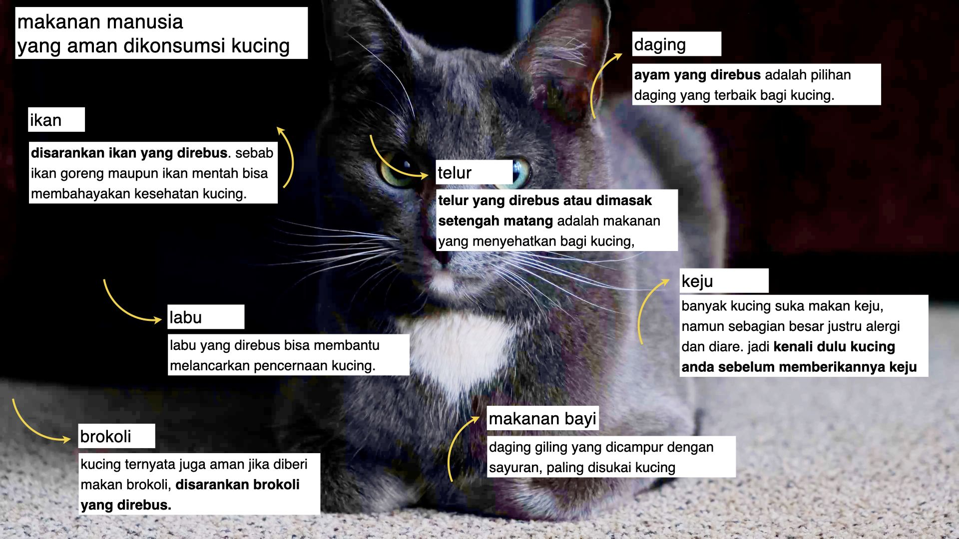 Apa Saja Makanan Untuk Kucing Kucing Makanan Kucing Makanan