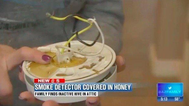 Surprised By Honey in Her Smoke Alarm