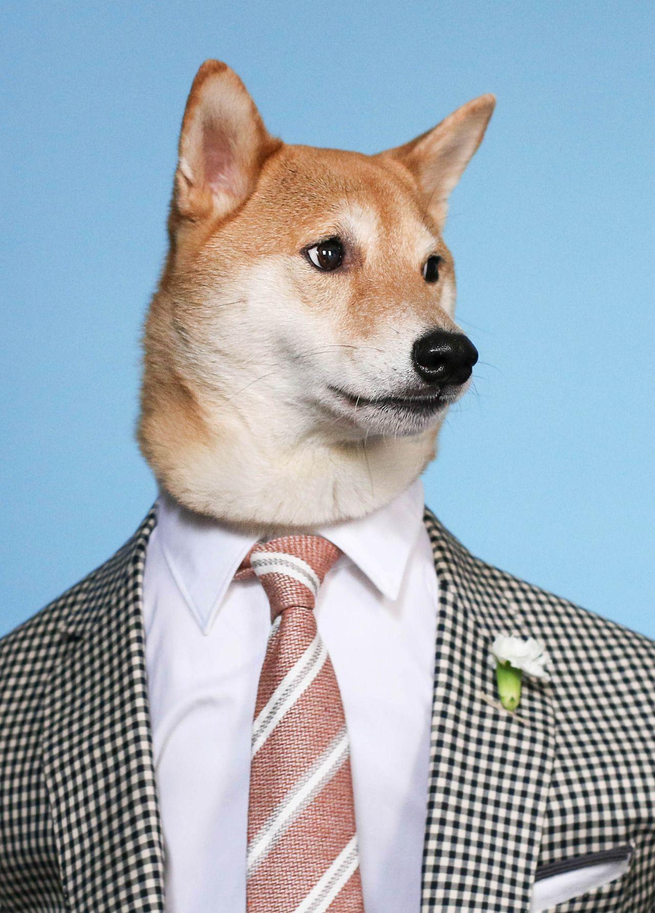 Mensweardog Menswear Dog Dog Clothes Dogs