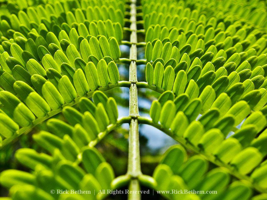 Symmetry Lessons Tes Symmetry Photography Symmetry Symmetrical Balance