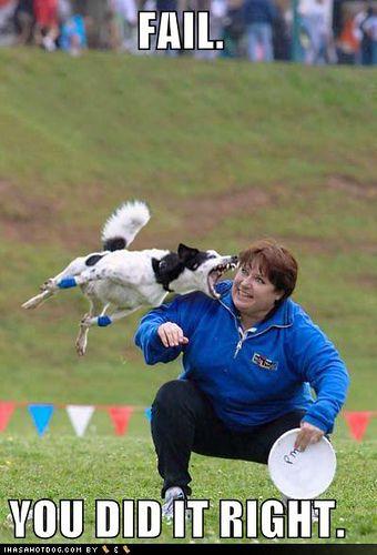 532e0ed77997f3ea3452da2cf5537b0a funny dog pictures dog bites frisbee womans face funny images