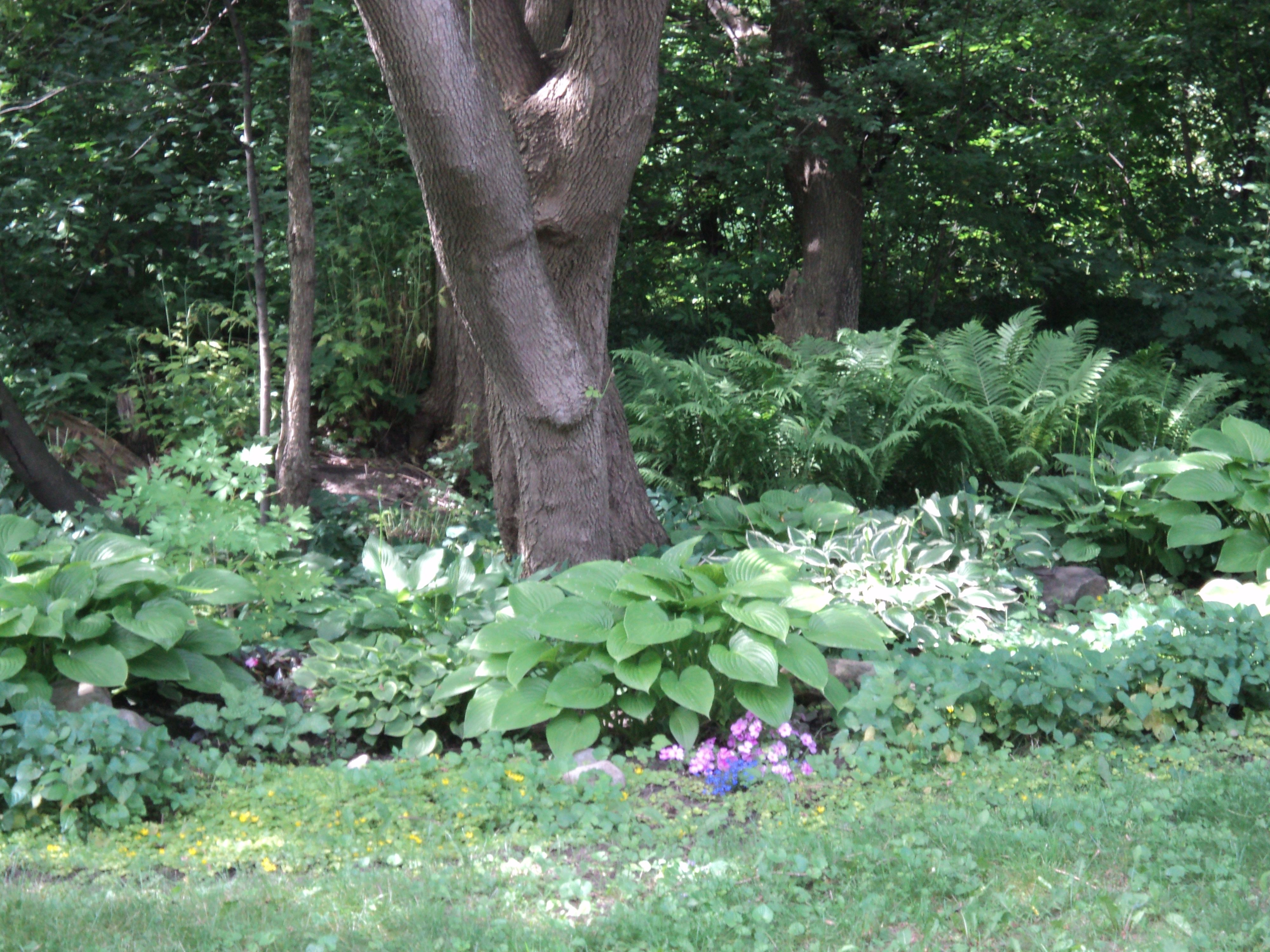 one millionth of my father's garden.