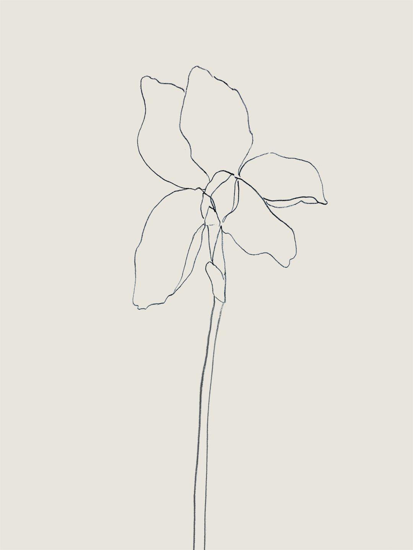 Iris Graphite On Paper By Tristan B Iris Drawing Flower Drawing Simple Line Drawings