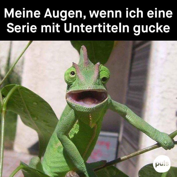 999 Zufällige Lustige Fotos und Memes #lustigebilder #memes #funny #vegetarianquotes