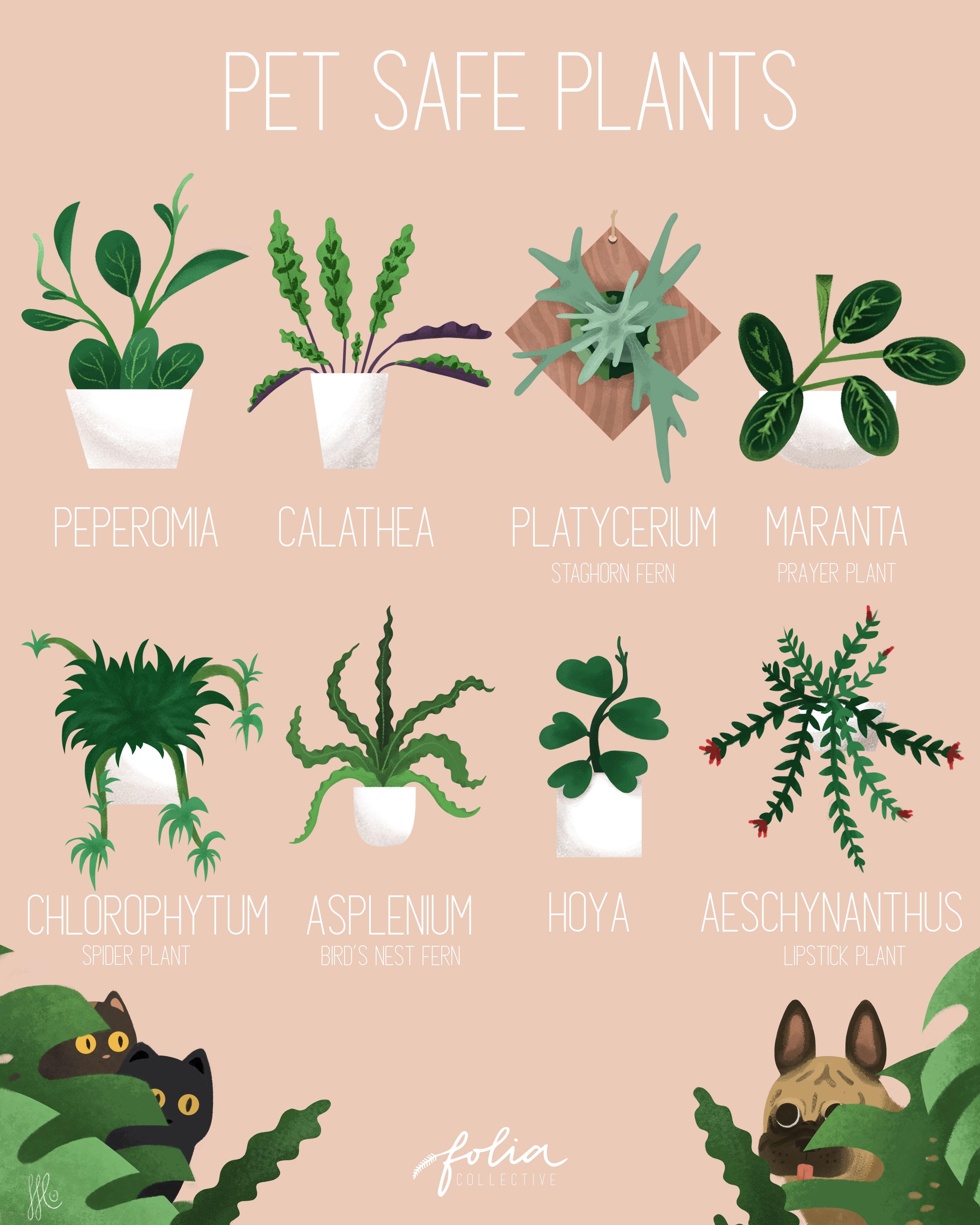 Pet Safe Plants Plants Pet Friendly House Plants Indoor Plants