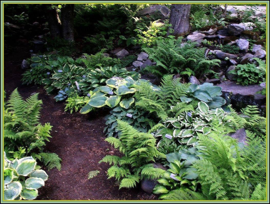 Beautiful Shade Garden From Vermont Flower Farm Hostas Planted From Shade Garden Ideas Source Pinteres Shade Garden Woodland Garden Backyard Garden Landscape