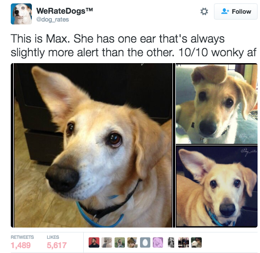 Max — 5/10 working ears, 10/10 dog. | Admit It, This Funny AF Twitter Account Is What We All Do To Dogs IRL