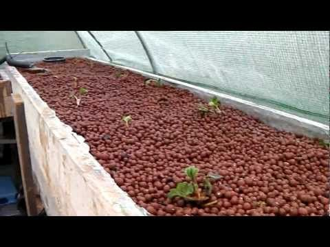 Aquaponics strawberry planting   Home – Movies    Great Aquaponics strawberry planting ! I like  strawberries a lot ! Very healthy food !