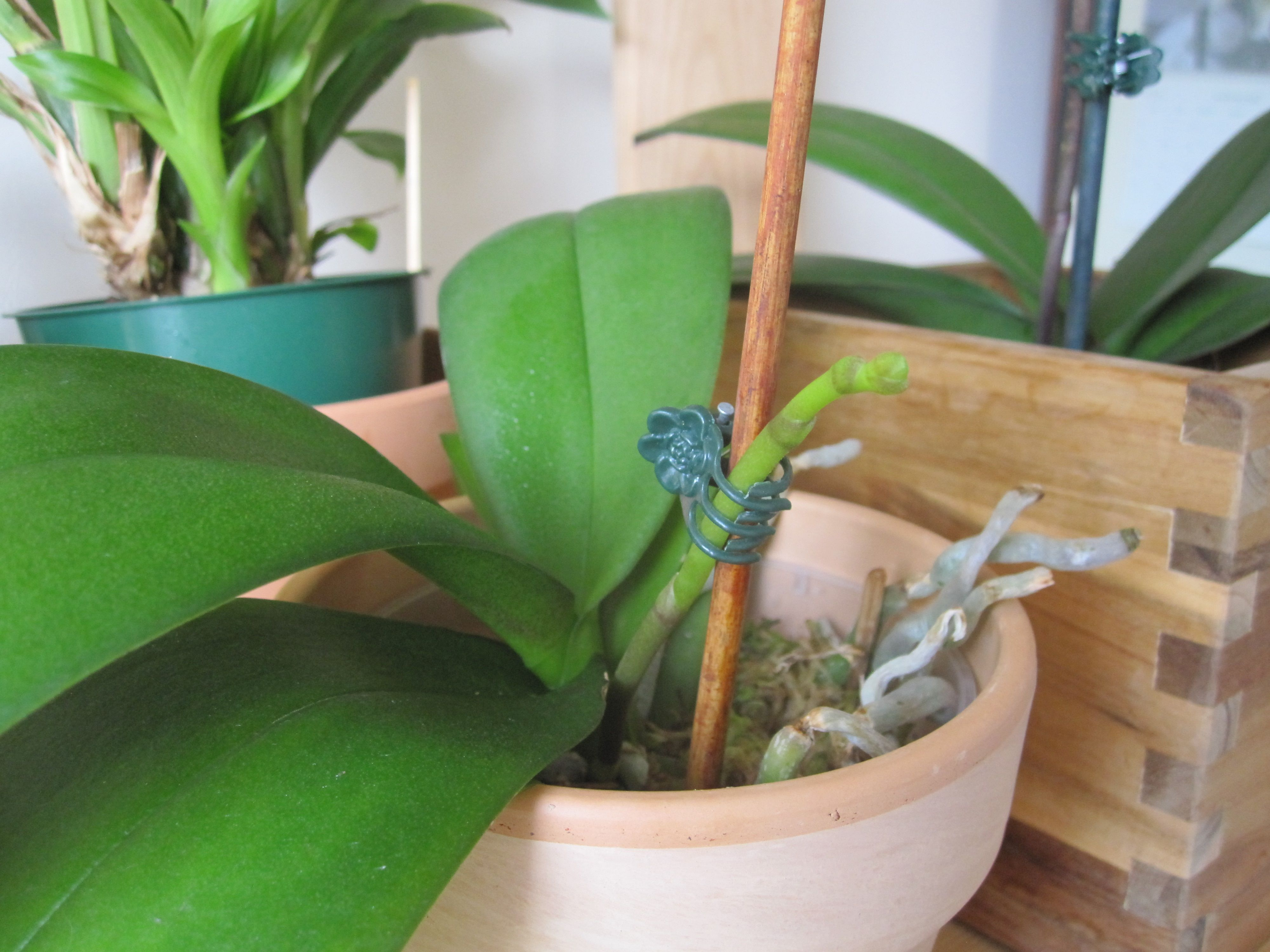 How to recognize orchid roots and orchid spikes part deux photos