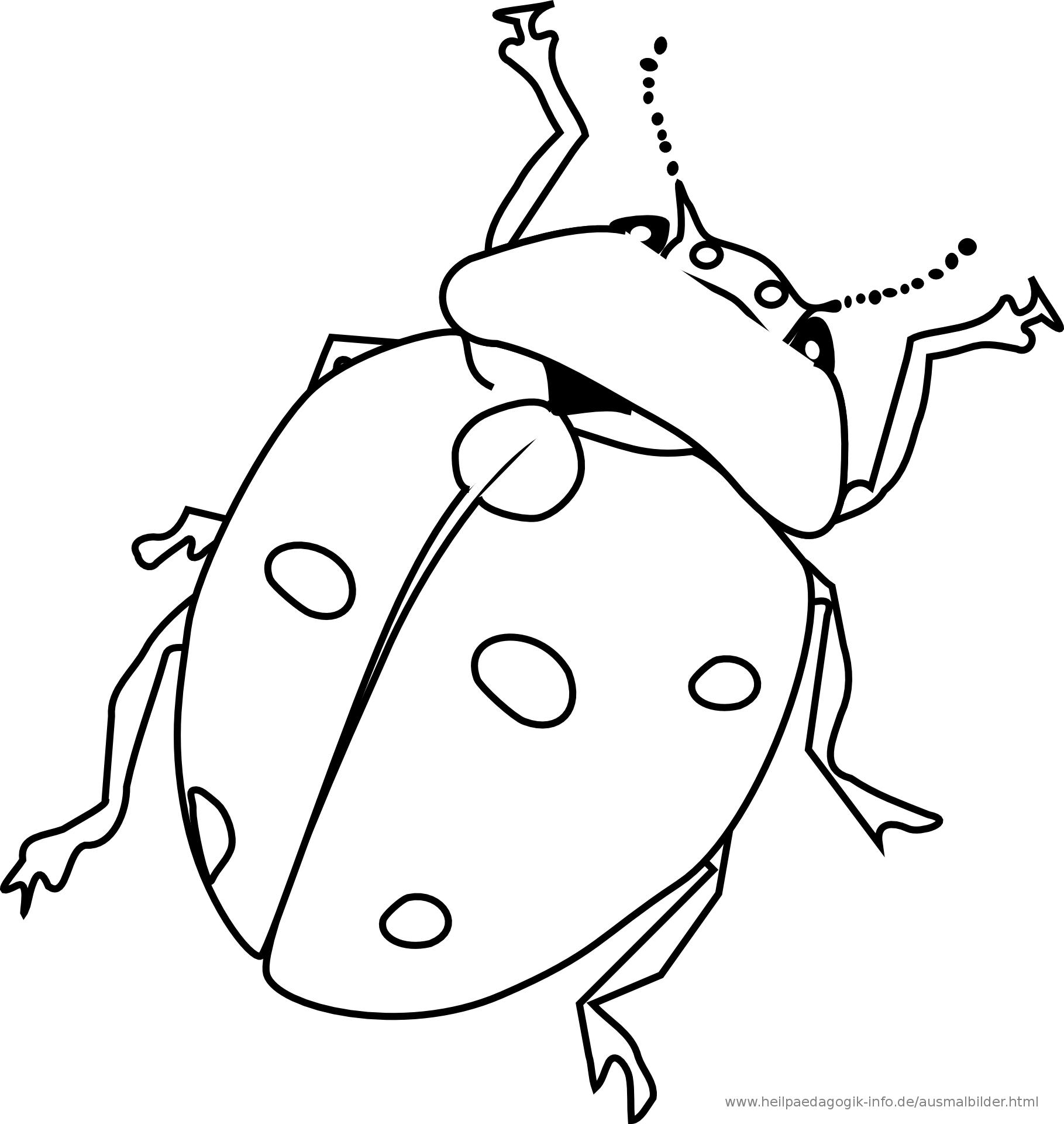 Kaefer Ausmalbilder Ausmalbilder Kaefer Ausmalbilder Ausmalen Lady Bug