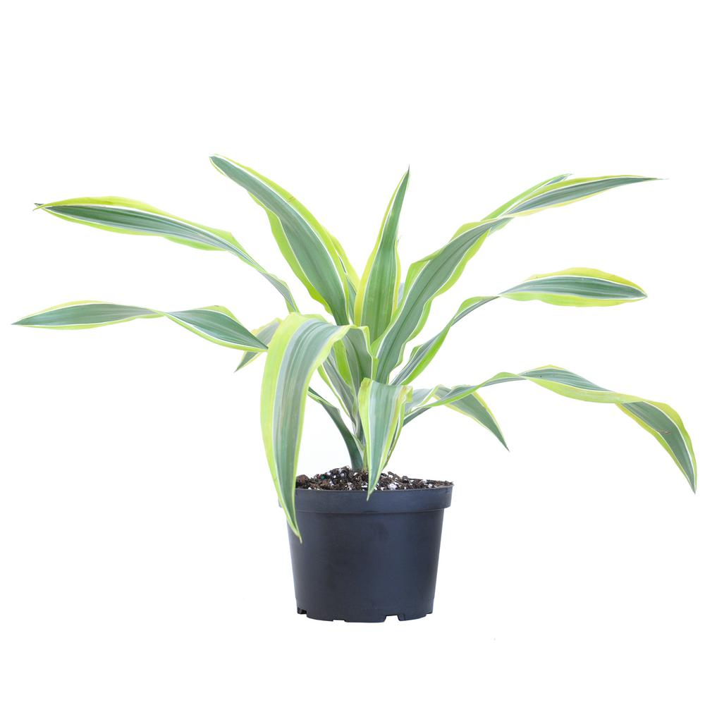 Nearly Natural Indoor 5 Ft Cordyline Real Touch Silk Plant 6580 The Home Depot Floor Plants Silk Plants Artificial Plants Outdoor