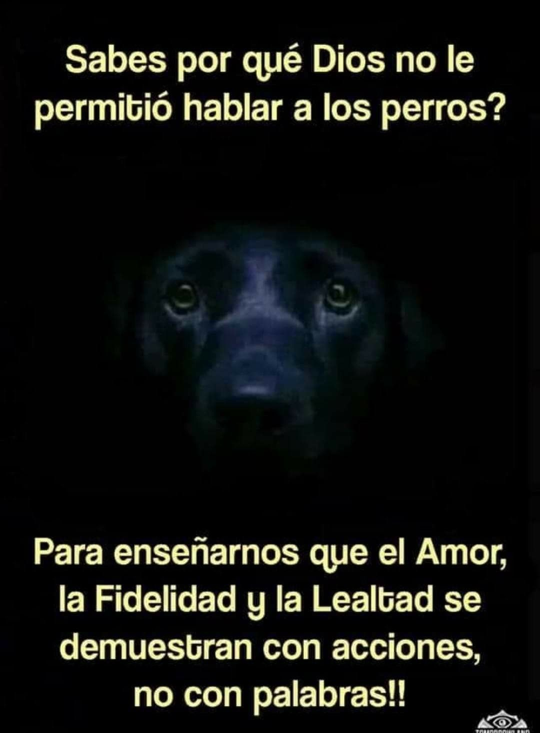 Pin By Sofia Arias On Perros Frases Dog Love Love You Meme Cat Quotes