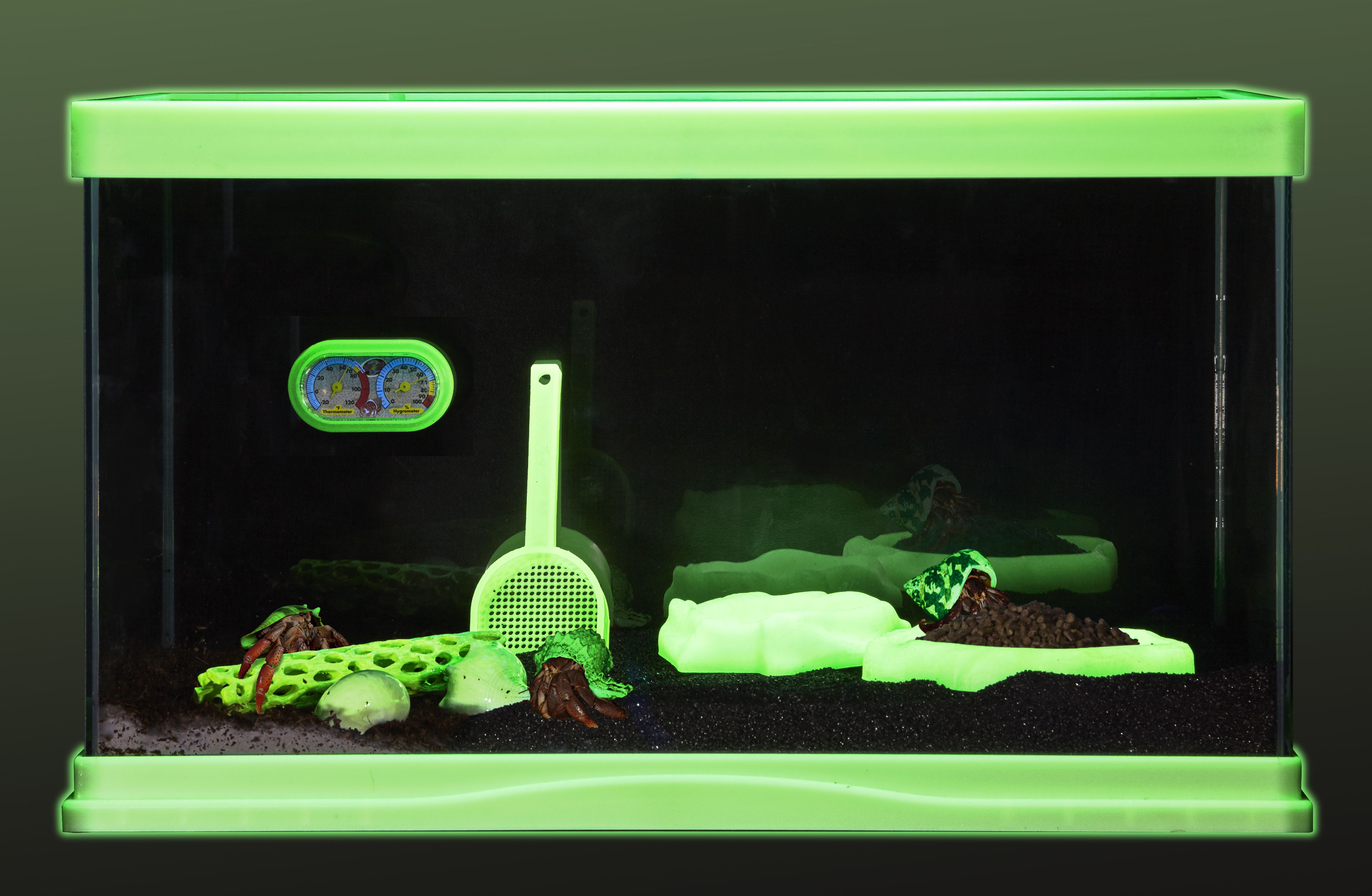 Start Your New Hermit Crab Habitat With This Cool 10
