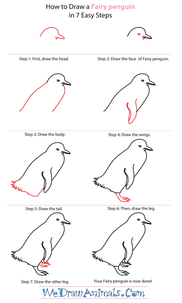 How to draw a fairy penguin · drawing stepdrawing