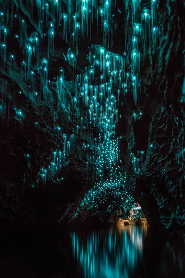 Avatar Pandora on Earth: Magical Cave Scene Created by Glow Worms in New Zealand