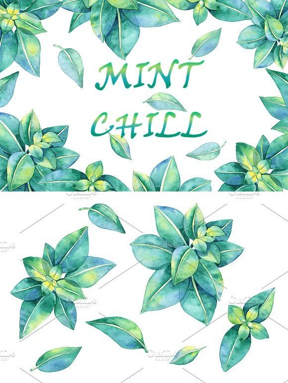 Watercolor Mint Leaves Watercolor Flowers Watercolor Mint Leaves