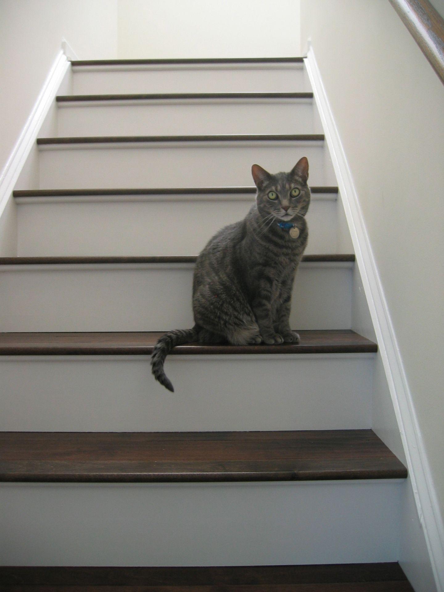 Best Installing Engineered Hardwood On Stairs Engineered 400 x 300