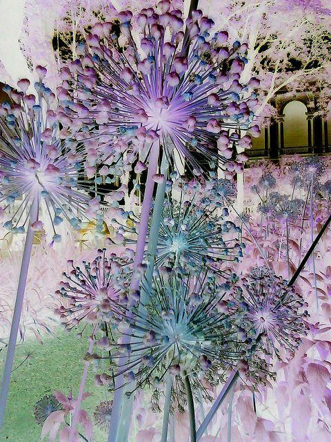 negative photo of flowers