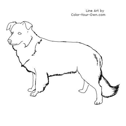 Border Collie Dog Standingcoloring Page Border Collie Yarn Painting Collie