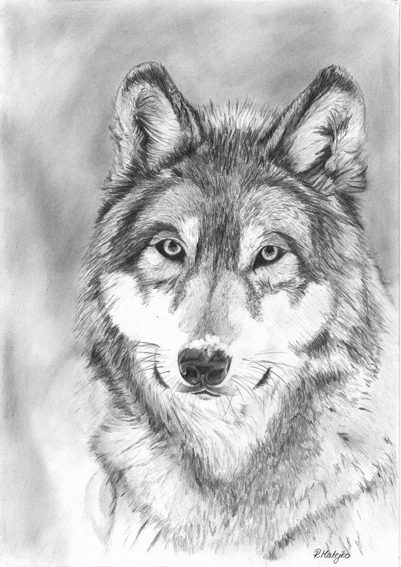 Wolf Original Graphite Pencil Drawing by GraphiteArtStudio ...