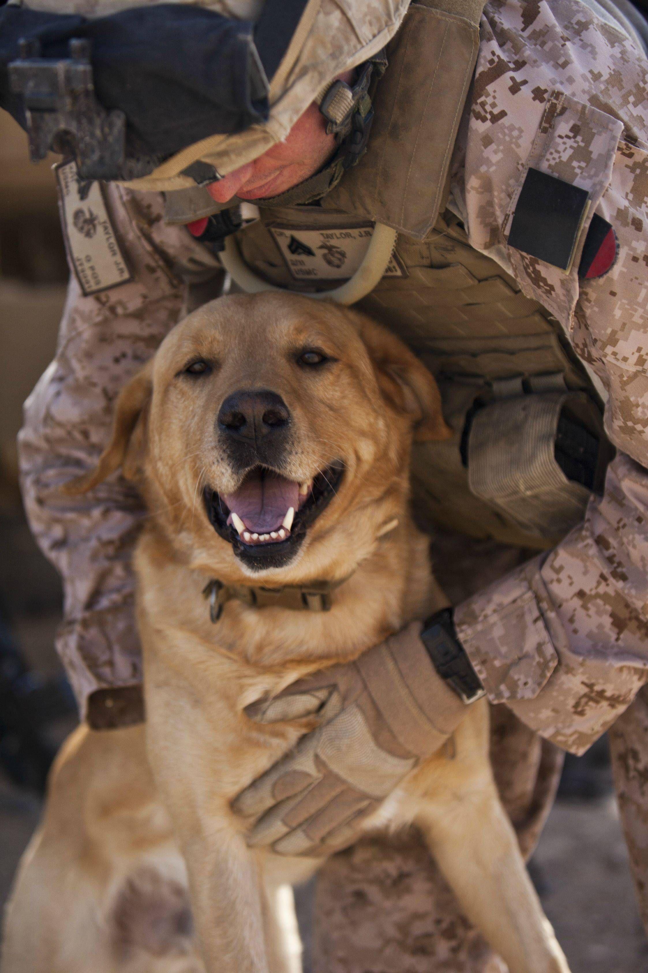 Military Working Dog Thor - USMC