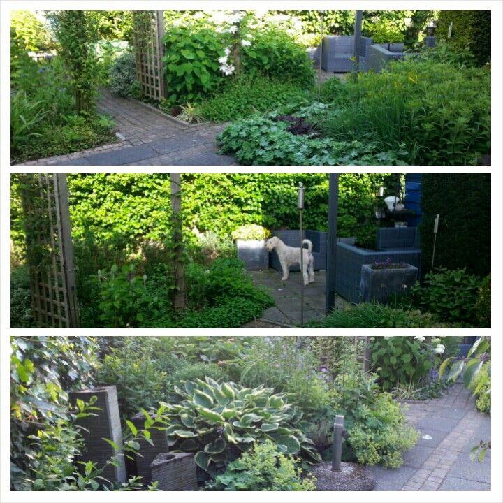 Oude tuin mooi maar veel onderhoud en de bestrating is verzakt