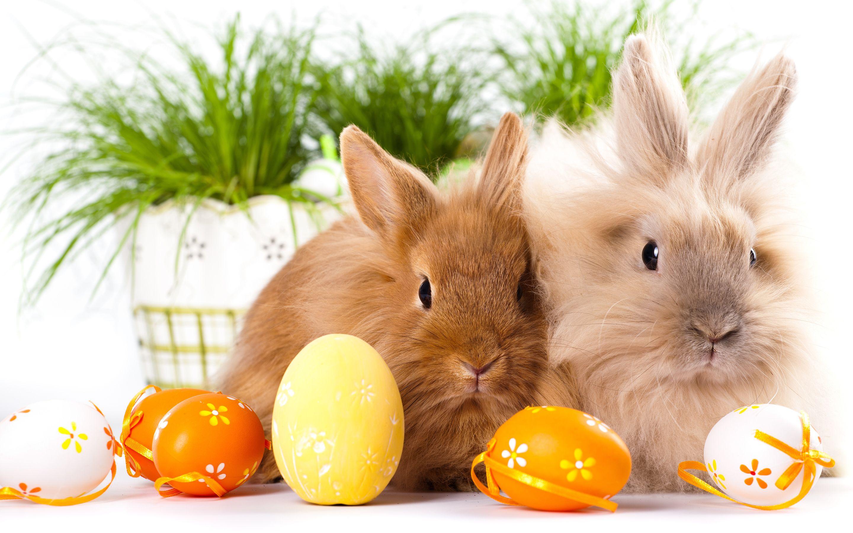Easter bunnies windows theme pinterest cover - Easter bunny wallpaper ...