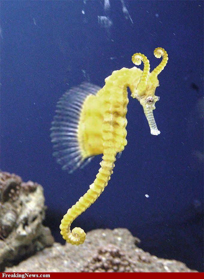 Seahorse Pictures Freaking News Beautiful Sea Creatures Seahorse Sea Animals