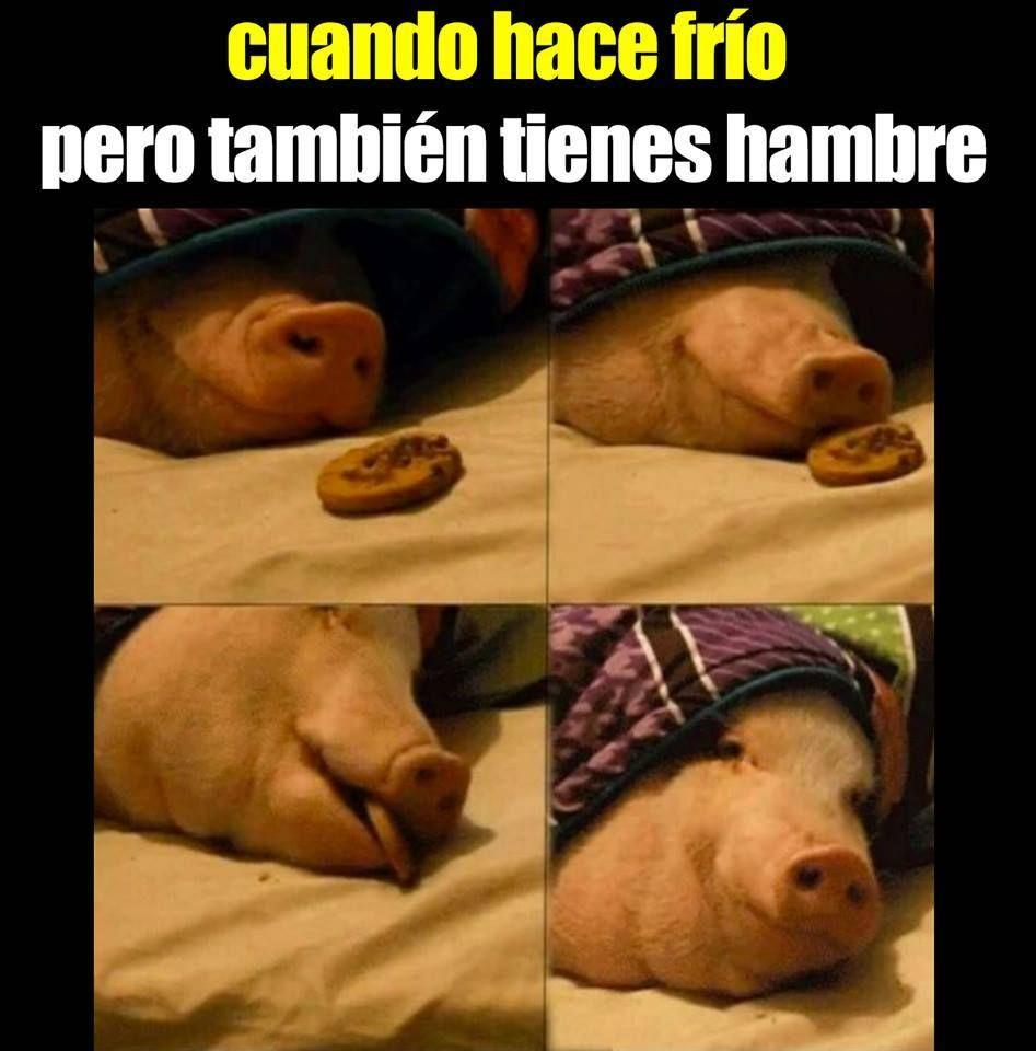 Imagenes De Risa Memes Chistes Chistesmalos Imagenesgraciosas Humor Funny Pictures Funny Animal Pictures Memes