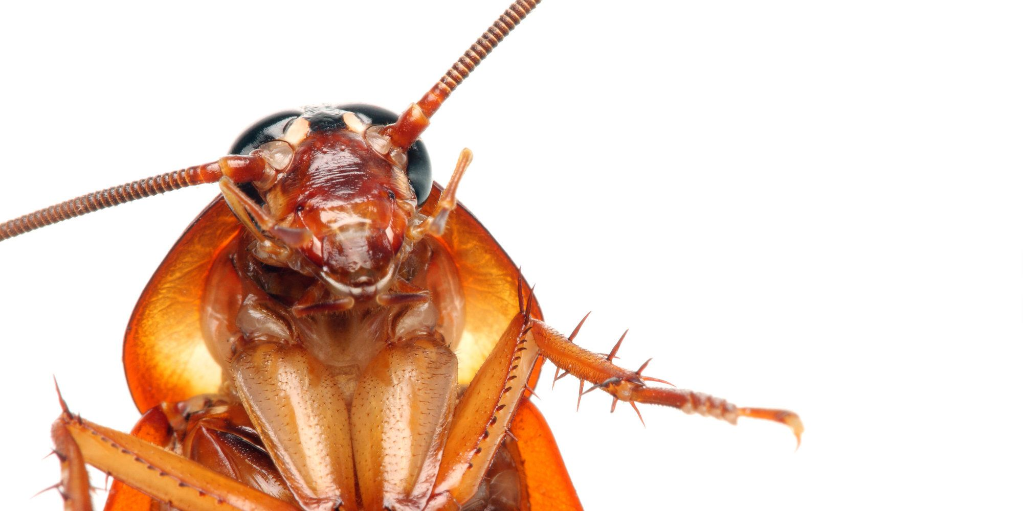 Remove Live Squirming Cockroach From Woman\'s Skull