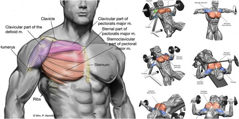 The Best Chest Exercises for Building a Broad, Strong