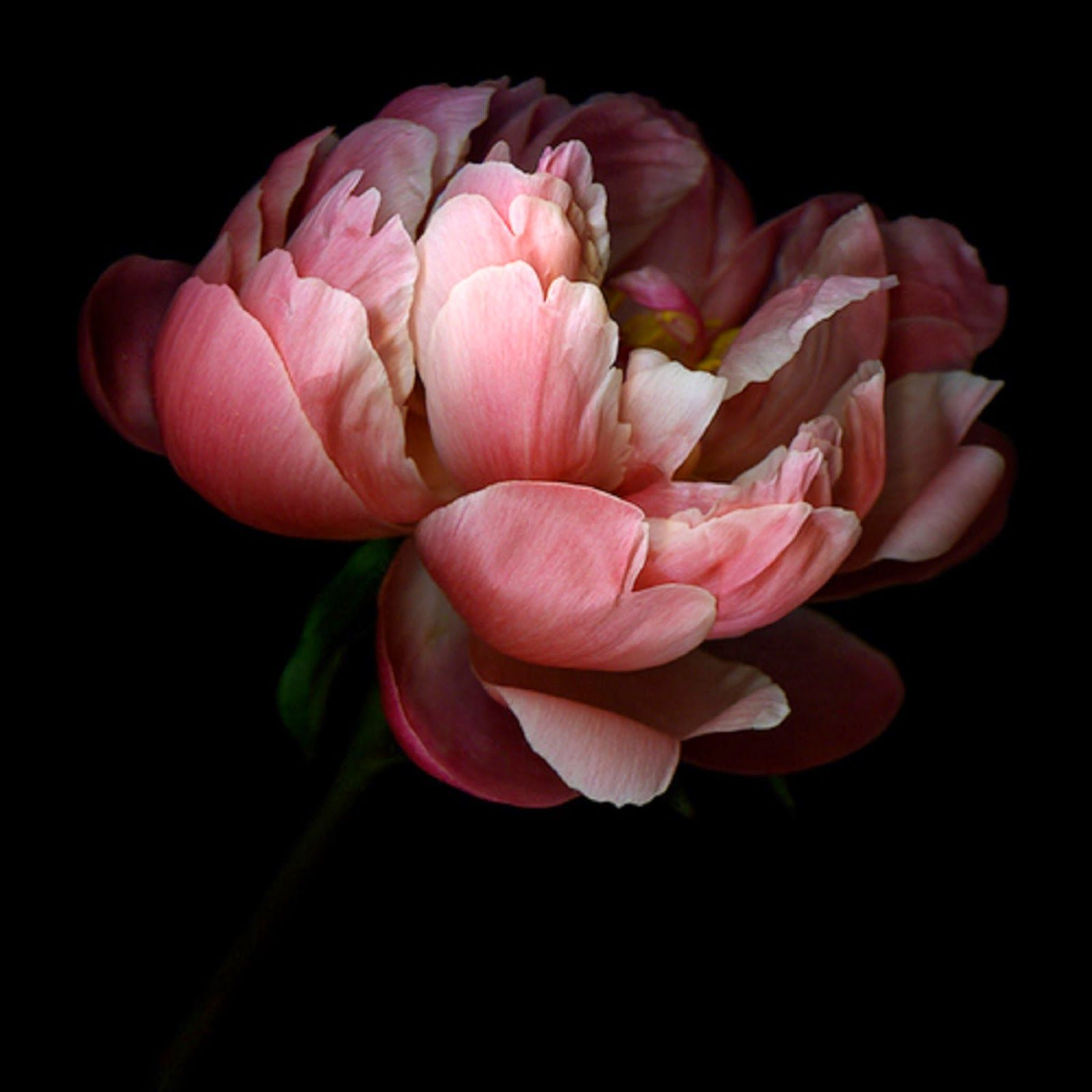 Image result for flower photography pinterest