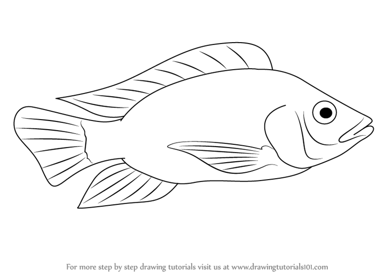 Learn How to Draw a Tilapia (Fishes) Step by Step