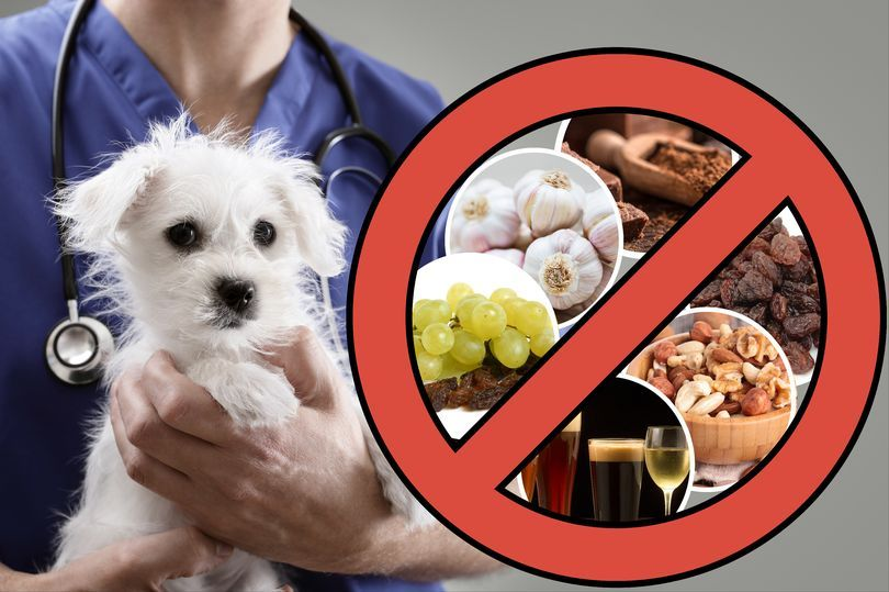 Foods you should never feed your dog pancreatitis in
