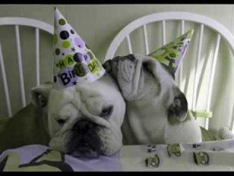 Happy Birthday Bulldog Images Puppies Kitties Happy Birthday