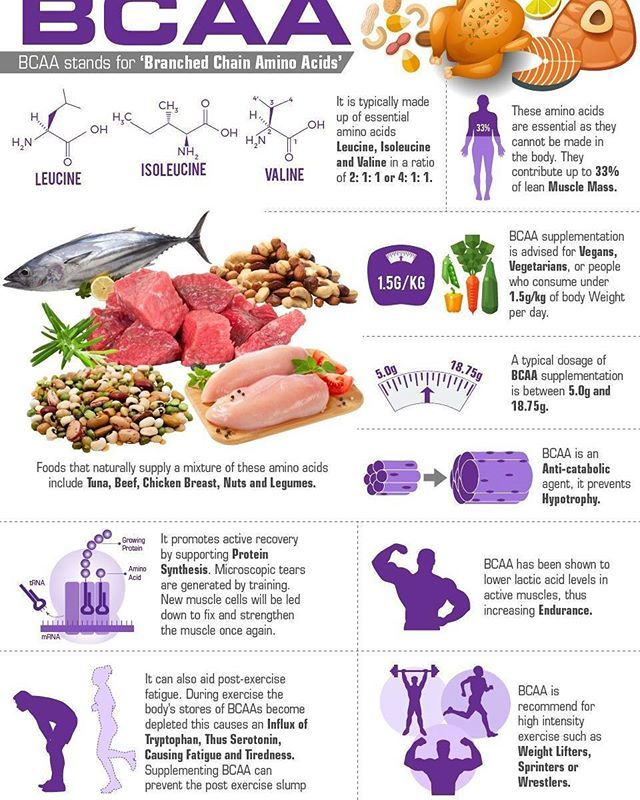 bcaa eller protein