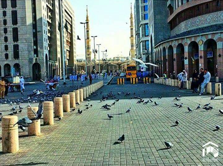 Pigeons Outside The Streets Of Madina Beautiful Mosques Street View Street