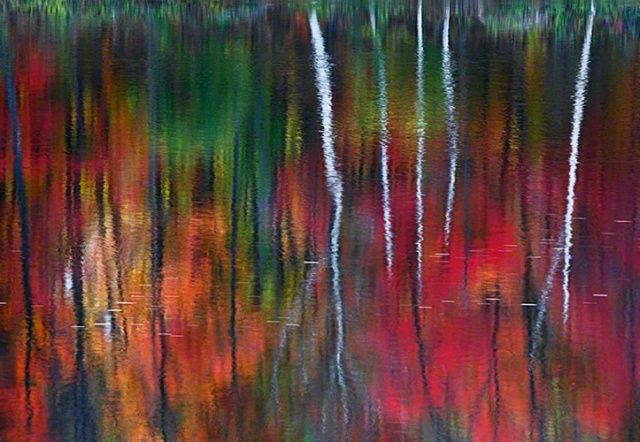 "The shot, taken just after dawn on the banks of the Androscoggin River in New Hampshire, resembles an impressionist painting. Peter named it ""One"" because it was a fleeting, singular opportunity; he felt a oneness with the moment and with nature; and he hit the shutter just once."